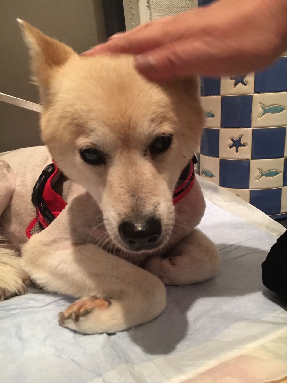 大波の会・保護・譲渡犬3