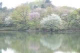 2三ツ池公園の春P1050428