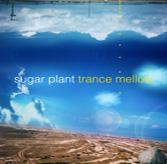 trance mellow/sugar plant