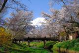 忍野の春(2)