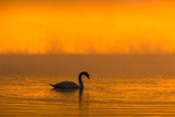 霧に煙る山中湖(3)
