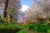 忍野の春(1)