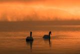 霧に煙る山中湖(2)