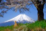 忍野の春(3)
