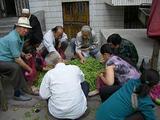 豆に群がる人々