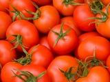 Tomato_Kagome