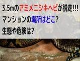 animenishikihebi_touou_teroppu