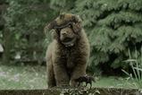 colossal_dog