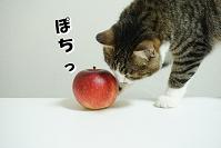 ブログ村(猫と1人暮らし)