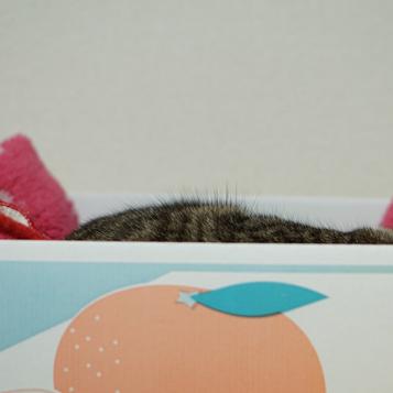 猫の抜け毛2
