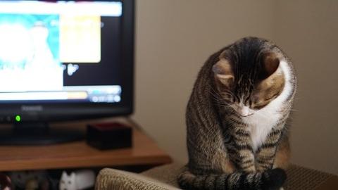 テレビ前の猫2