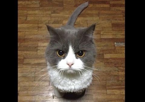 mean_cat_4-2