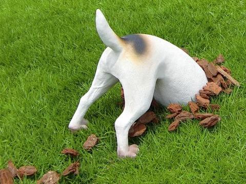 dog-ana1-498x373
