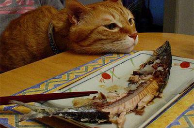 魚に飽きた猫