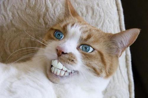 イケメンな猫