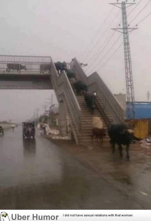 歩道橋を渡りましょう。
