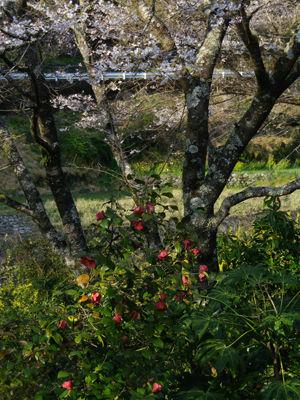 仁淀川へ_2-1