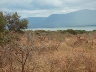 南アフリカ24-1