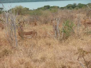 南アフリカ24-3