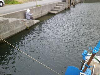 琵琶湖でタナゴを_01-2