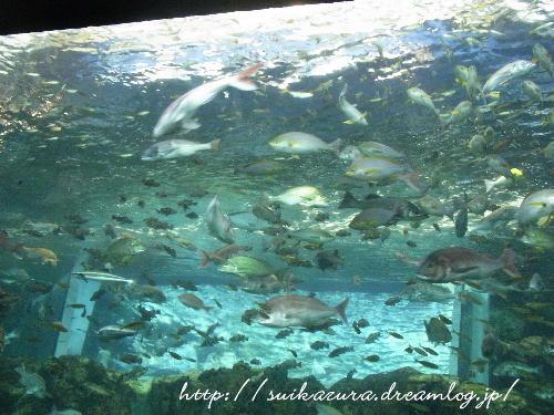 1関門海峡の魚
