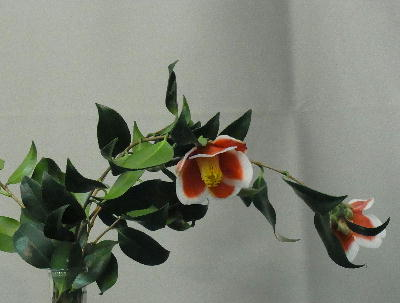 椿展 玉の浦
