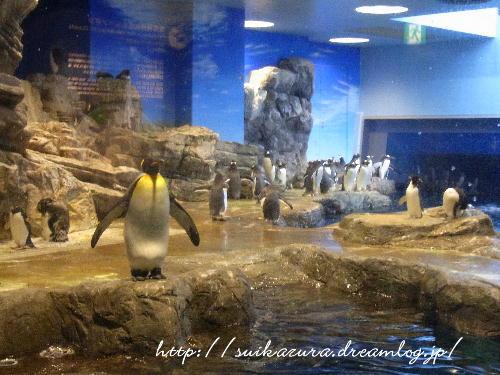 16ペンギン