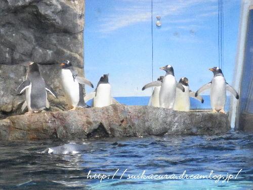 17ペンギン