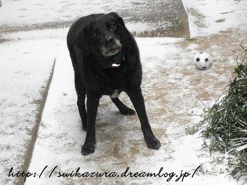 雪とあやめ