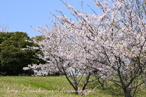青空と桜2017