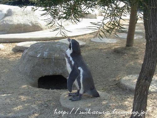 23ペンギン
