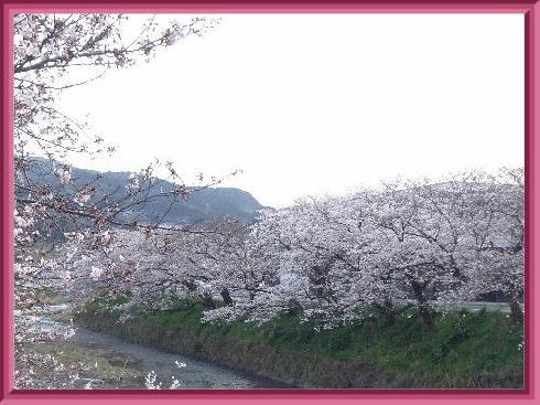 桜公園2019-2