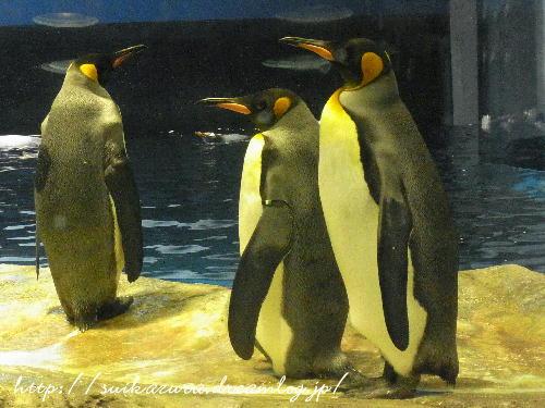 ペンギン2017-2