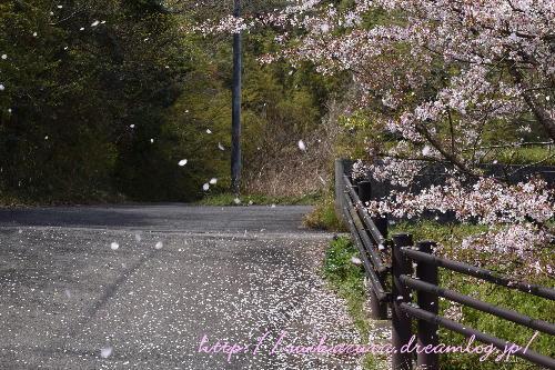 桜吹雪2017-2