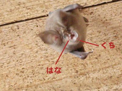 c01ea4cf.jpg