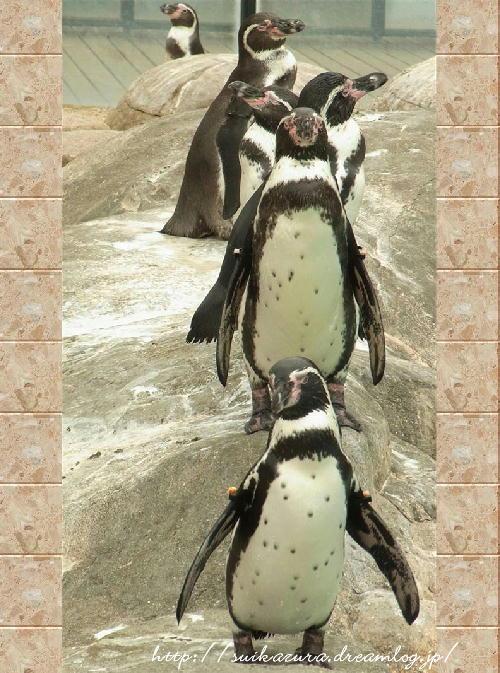ペンギン2017