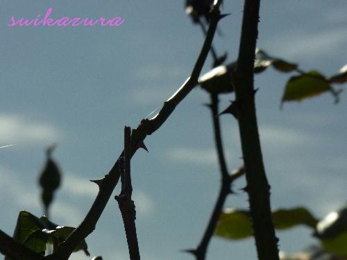 ピンクのバラのとげ
