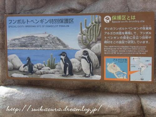 24ペンギン