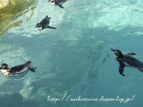 22ペンギン