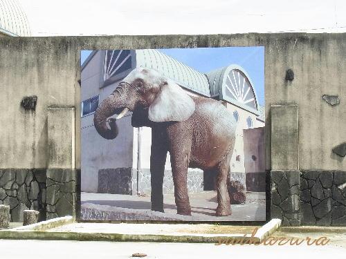 ゾウ 写真