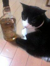 ウイスキー・キャット?