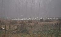 水鳥農場-8