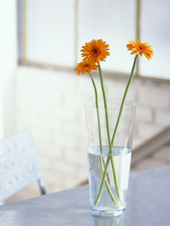 コップと花