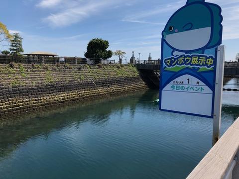 鹿児島水族館 いおワールド-21