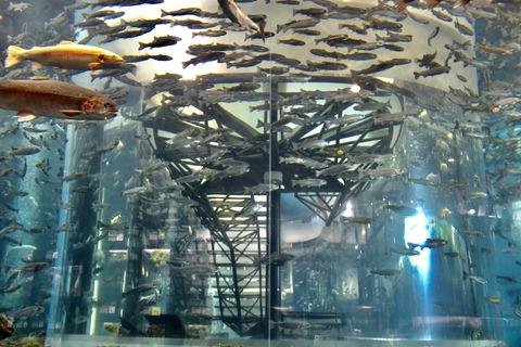 山梨県立富士湧水の里水族館 森の中の水族館-50