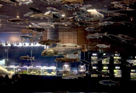 山梨県立富士湧水の里水族館 森の中の水族館-56