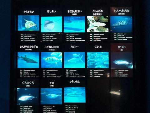 鹿児島水族館 いおワールド-4