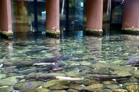 山梨県立富士湧水の里水族館 森の中の水族館-45