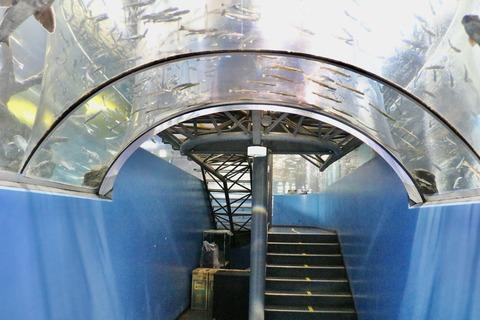 山梨県立富士湧水の里水族館 森の中の水族館-21