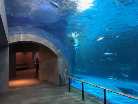 鹿児島水族館 いおワールド-6